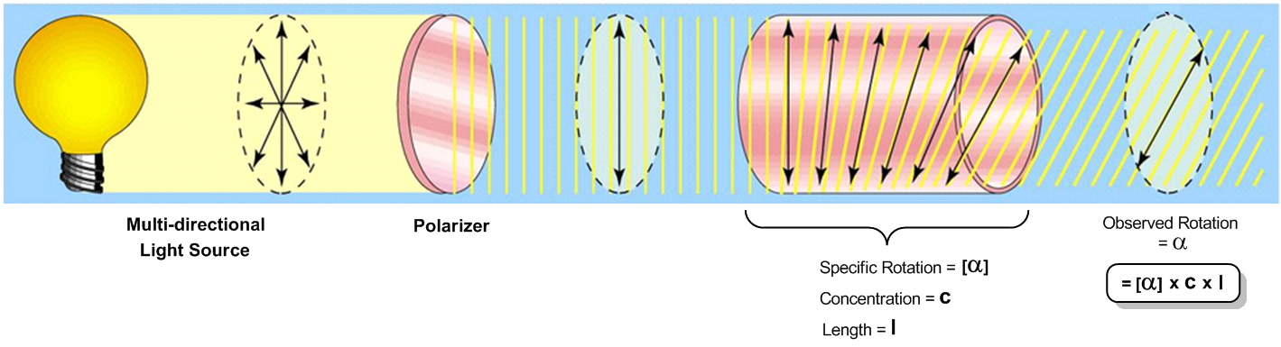 Optical Activity: Specific vs. Observed Rotation - | Clutch Prep