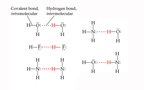 Hydrogen bonds are represented by dotted lines and are between H in one molecule and F, N, or O in an adjacent molecule. Covalent bonds are bonds between atoms within the same molecule and are represented by solid lines. Example 1: O (two electron pairs) is covalently bonded to two H atoms, and hydrogen bonded to an H in a nearby water molecule (H2O). Example 2: F (three electron pairs) is covalently bonded to H, and hydrogen bonded to another H in a nearby FH molecule. Example 3: N (one electron pair) is covalently bonded to three H atoms, and is hydrogen bonded to an H that is part of another NH3 molecule (one electron pair on the N). Example 4: O (one electron pair) is covalently bonded to two H atoms, and is hydrogen bonded to an H that is part of an NH3 molecule (one electron pair on the N).