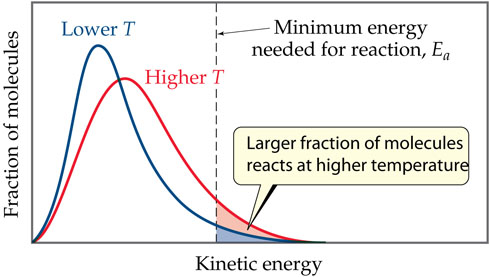 A graph has kinetic energy on the x-axis and fraction of molecules on the y-axis. Both axes are unscaled. Two hump-shaped curves are plotted; one for lower temperature and one for higher temperature. A vertical dotted line at the midway point of the x-axis is the minimum energy needed for the reaction, Ea. Both temperature curves peak to the left of the minimum energy needed, with only their right tails crossing this line. The lower temperature peak is higher and to the left of the higher temperature peak, but the tail of the higher temperature peak crosses the minimum energy line higher than the tail of the lower temperature peak, meaning that at higher temperatures a larger fraction of molecules react.