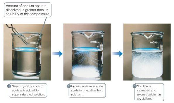 (1) A seed crystal of sodium acetate is added to supersaturated solution. The amount of sodium acetate dissolved is greater than its solubility at this temperature, and a white substance is visible in a beaker holding a clear liquid in a photograph. (2) Excess sodium acetate starts to crystallize from solution. A photograph shows a substance with many white threadlike extensions at the bottom of the liquid and extending down from the surface of the liquid. (3) Solution is saturated and excess solute has crystallized. A photograph shows a crystal filling most of the beaker.