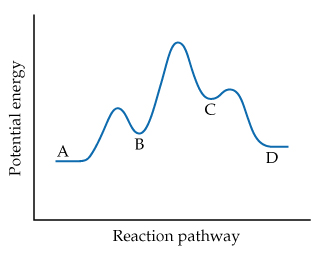 A graph has reaction progress on the x-axis and potential energy on the y-axis (both axes unscaled). The curve rises from the initial state to a low peak followed by a trough, and then a high peak followed by a trough and another low peak, and then declines to the final state. (A) is the initial state; (B) is the trough following the first lowest peak, (C) is the trough following the highest peak, and (D) is the final state which is higher energy than the initial state.