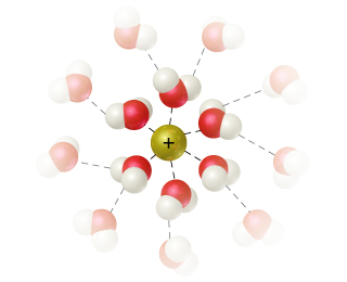 Dotted lines connect a central cation to the O of 5 surrounding water molecules. These water molecules are hydrogen bonded to other water molecules.