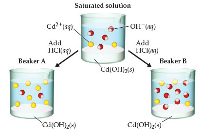 A beaker contains a saturated solution with Cd2+ and OH- ions and Cd(OH)2 solid. Beaker A: Adding HCl leads to more Cd2+ and less precipitate. Beaker B: Adding HCl leads to more OH- and less precipitate.