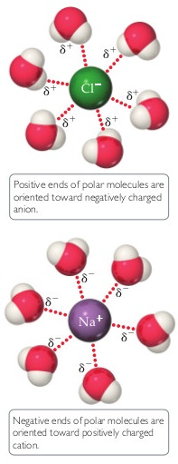 Positive ends of polar molecules are oriented toward negatively charged anions. A diagram shows a central Cl- forming hydrogen bonds with partially positively charged hydrogens in six surrounding water molecules. Negative ends of polar molecules are oriented toward positively charged cations. A diagram shows a central Na+ forming hydrogen bonds with partially negatively charged oxygens in six surrounding water molecules.