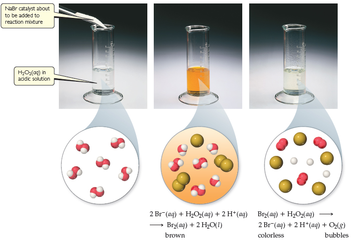 At the initial time, a solid NaBr catalyst is about to be added to the reaction mixture in a graduated cylinder containing H2O2 (aqueous) in acidic solution. The solution is clear. At an intermediate time, the solution in the graduated cylinder has turned brown. The reaction is 2 Br- (aqueous) plus H2O2 (aqueous) plus 2 H+ (aqueous) goes to Br2 (aqueous, brown) plus 2 H2O (liquid). At the final time, the solution in the cylinder is again clear and there are bubbles near the surface. The reaction is Br2 (aqueous) plus H2O2 (aqueous) goes to 2 Br- (aqueous, colorless) 2 H+ (aqueous) plus O2 (gas, bubbles).
