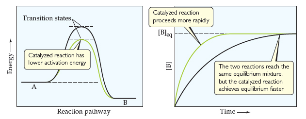 First graph: The x-axis is reaction pathway and the y-axis is energy (increasing); both axes are unscaled. Curves show an uncatalyzed and a catalyzed reaction. Both begin at the reactants, A, and climb to a peak at the transition states, but the catalyzed peak is lower and thus has lower activation energy. Both curves then decline to the products, B, which are lower energy than the reactants. The second graph has time (increasing) on the x-axis and concentration of B on the y-axis. Both axes are unscaled. Curves show an uncatalyzed and a catalyzed reaction. Both begin at the origin and increase, but the catalyzed reaction proceeds more rapidly. The two reactions reach the same equilibrium mixture and flatten at the same point on the y-axis, but the catalyzed reaction achieves equilibrium faster.
