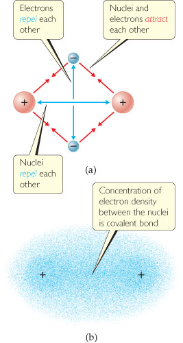 Diagram shows that (a) electrons repel each other, and nuclei repel each other, but nuclei and electrons attract each other; and (b) that concentration of electron density clouds between two nuclei is a covalent bond.