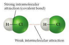 Within HCl molecules, strong intramolecular attraction is between H and Cl in the form of a covalent bond. Between two HCl molecules, a weak intermolecular attraction is between the Cl of one molecule and the H of another.