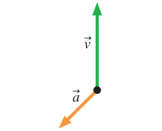The figure shows velocity and accelerations vectors. Both vectors start at the same point. Velocity vector points directly upwards. Acceleration vector has smaller magnitude than the velocity vector and points approximately 120 degrees counterclockwise from the direction of the velocity vector.