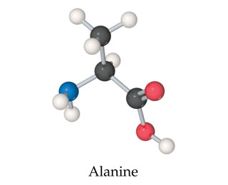 Alanine is a central CH single bonded above to CH3, below (angled right) to COOH, and below (angled left) to NH2.