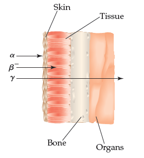 A diagram shows that alpha rays do not penetrate the skin; beta rays penetrate skin and enter tissue, and gamma rays penetrate skin, tissue, bone and organs.