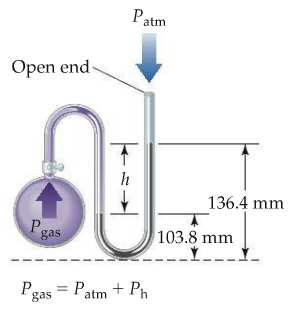 An apparatus consists of a flask attached to a U-shaped tube containing mercury. The U-shaped tube is open at the end opposite the flask. Atmospheric pressure (P atm) exerts a downward force on the open end of the tube.  Gas in the flask (Pgas) enters the U-shaped tube and exerts a force on the mercury in the U-shaped tube; the mercury is higher on the open ended side. The difference in the height in mercury between the flask side of the U–shaped tube and the open ended side is h. The difference between the tallest height of mercury, on the open-ended side of the tube, and the bottom of the U is 136.4 millimeters. The difference between the lowest level of mercury (on the flask side of the U) and the bottom of the U is 103.8 millimeters. P gas equals P atm plus P h.