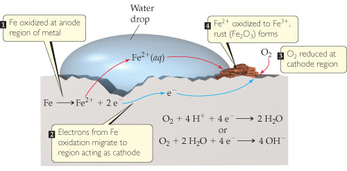 A diagram shows a piece of solid iron with a water drop on top. 1. Fe is oxidized at the anode region of the metal.  Fe goes to Fe2+ plus 2 e-. 2. Electrons from Fe oxidation migrate to the region acting as the cathode. 3. O2 is reduced at the cathode region.  O2 plus 4 H+ plus 4 e- goes to 2 H2O, or O2 plus 2 H2O plus 4 e- goes to 4 OH-. 4. Fe2+ is oxidized to Fe3+ as rust (Fe2O3) forms.