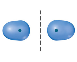 A diagram shows two ovals separated by a dashed line. Each oval has a dot in the end nearest the dashed line.