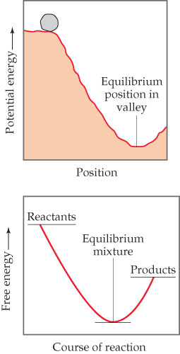A diagram shows a rock at a high potential energy, positions high above the equilibrium position in a valley.  This situation is analogous to a graph showing course of reaction on the x-axis and free energy on the y-axis (increasing, unscaled).  The reactants are at a high free energy on the left and the products are at a medium free energy on the right.  In between products and reactants is a valley that is the equilibrium mixture.