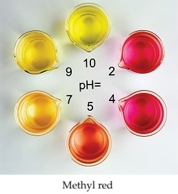 A series of photographs shows three different pH indicators at a number of different pHs. Methyl red is dark red at pHs 2 and 4, light red at pH 5, orange at pH 7, dark yellow at pH 9, and yellow at pH 10.