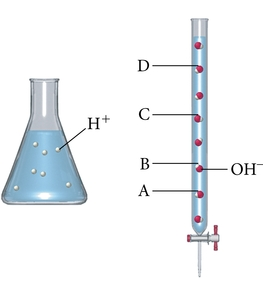 A flask with strong acid is shown. Seven white spheres are shown in the solution depicting seven H plus ions. To the right of the flask is a burette with eight molecules of OH minus (depicted as a red sphere bonded to a white sphere) evenly spaced going up the burette. The letters A through D are used to label various positions going up the burette. Going from the bottom of the burette; letter A marks the second OH minus molecule; letter B marks the third OH minus molecule; letter C marks the fifth OH minus molecule; and letter D marks the seventh OH minus molecule.