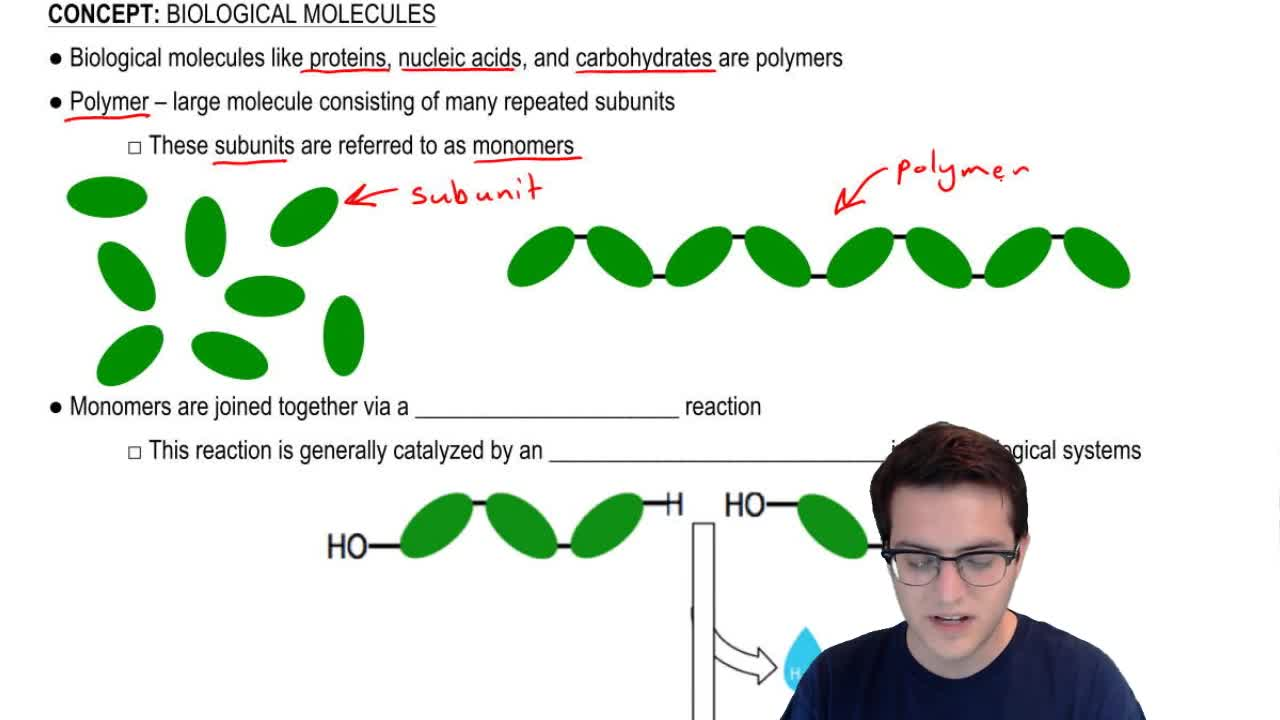 chpt 2 biological molecules Chapter 5: structure and function of large biological molecules 1 the large molecules of all living things fall into four main classes.