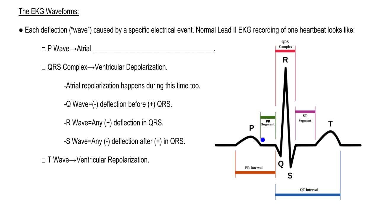 Electrocardiography ii interpreting an ekg anatomy clutch prep pooptronica Images