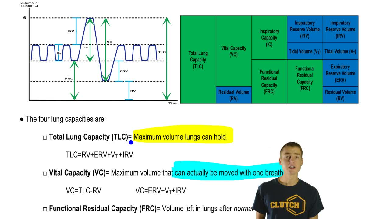 lungs lung volumes and lung capacity