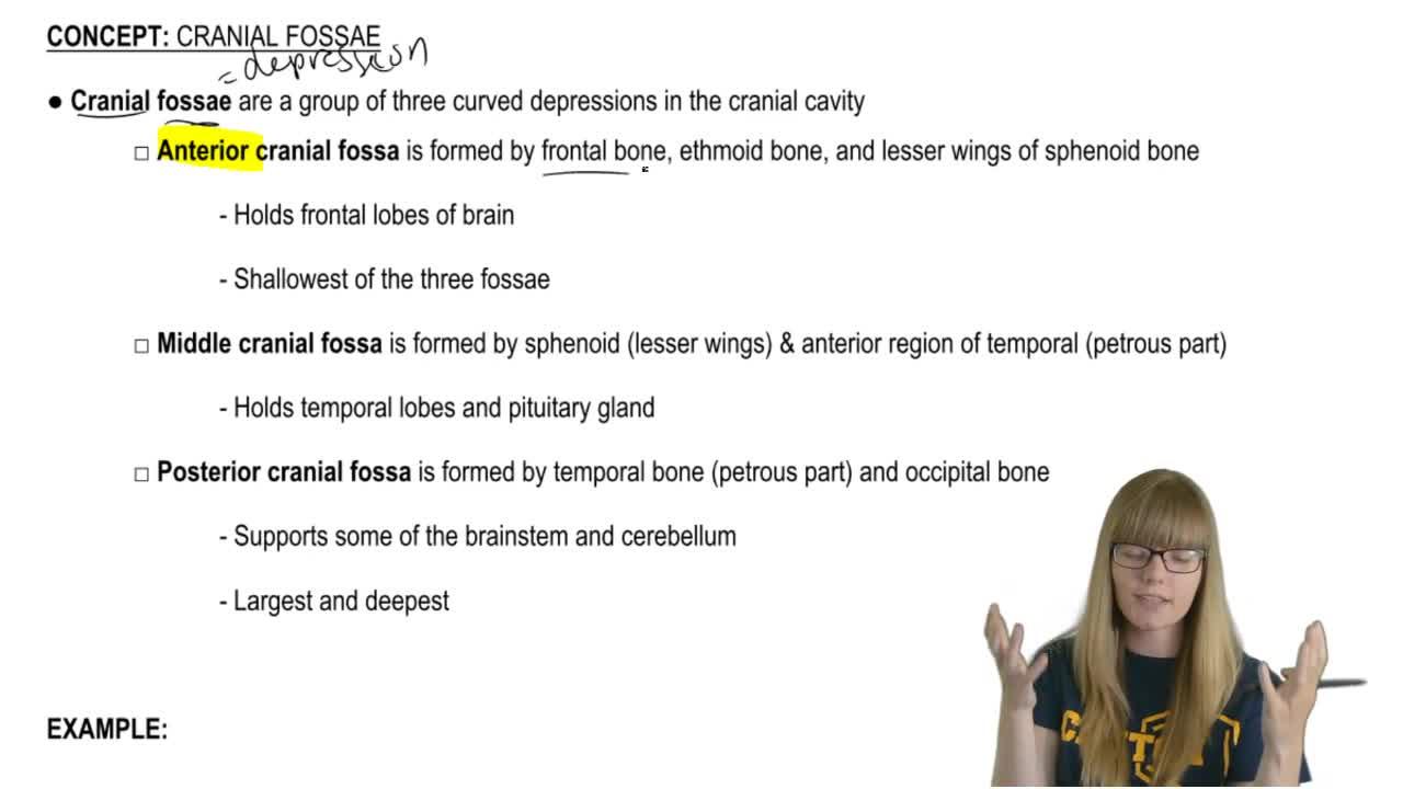 Cranial Fossae - Anatomy & Physiology Video | Clutch Prep