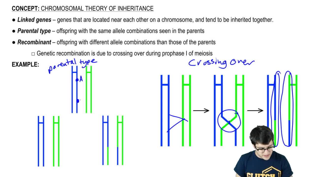theory of inheritance vs theory of Return to content chromosomal theory of inheritance - explained let us make an in-depth study of the chromosomal theory of inheritance mendel held that the traits were transmitted from generation to generation as discrete, stable, particulate units of heredity called factors, now termed as genes.