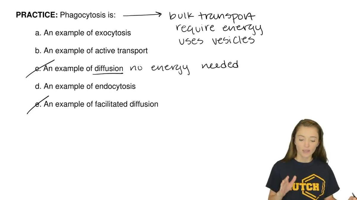 Solution Phagocytosis Is A An Example Biology