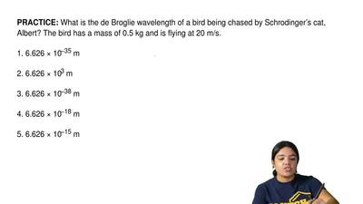What is the de Broglie wavelength of a bird being chased by Schrodinger's cat,...