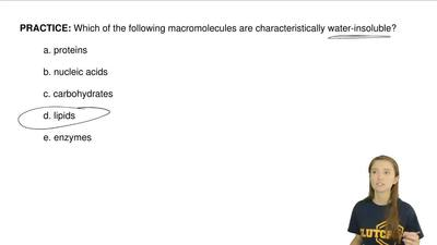 Solution What Macromolecule Could Be Mad Biology