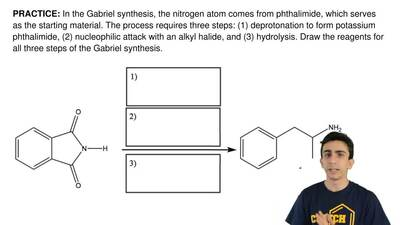 In the Gabriel synthesis, the nitrogen atom comes from phthalimide, which serv...